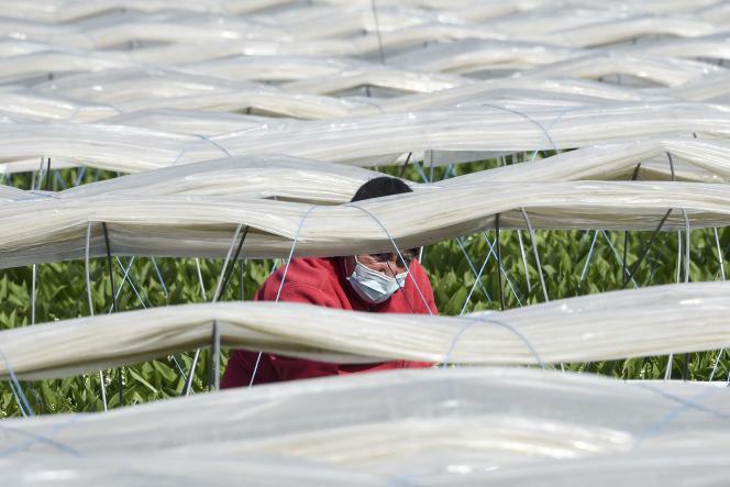Un travailleur saisonnier àSaint-Philbert-de-Grand-Lieu (Loire-Atlantique), en avril.