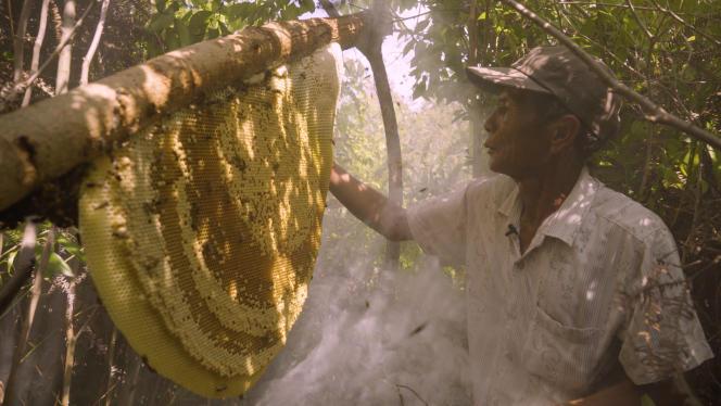 «Une terre sans abeilles ?», de Nicolas Dupuis et Elsa Putelat.