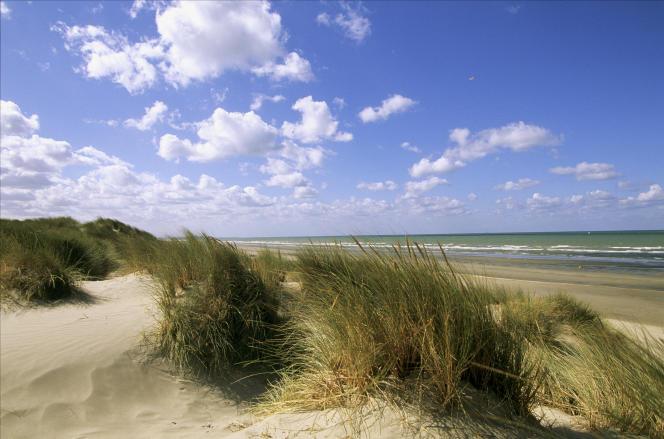 Dunes aux environs de Zuydcoote (Nord).