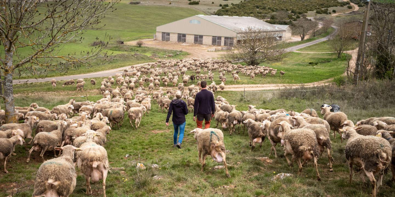 «On a toujours montré qu'une autre agriculture est possible»: Le Larzac, éternel laboratoire paysan