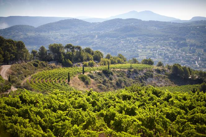 Les vignes du Château de Pibarnon à La Cadière-d'Azur (Var).