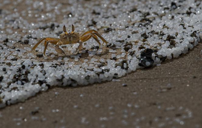 Des tonnes de granules de microplastique provenant de la cargaison du navire ont souillé les plages du Sri Lanka.