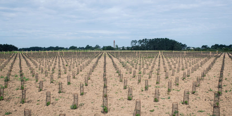 Belle-Ile-en-Mer se divise autour d'un projet viticole