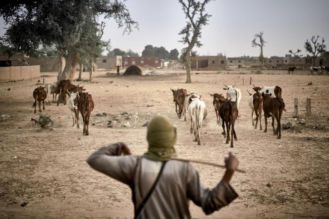 Un éleveur peul conduit son bétail entre Sévaré et Mopti, dans le centre du Mali, le 18mars 2021.