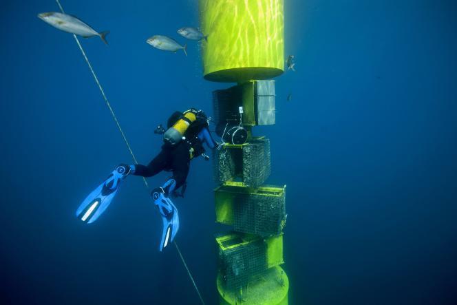 Un plongeur effectue des relevés sur une structure d'observation des flux migratoires de poissons développée par Ecocean, société d'ingénierie écologique en milieu marin,à Leucate (Aude), en septembre 2019.
