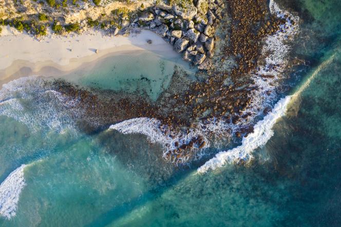 Kangaroo Island abrite plusieurs réserves naturelles où vivent des animaux sauvages australiens.