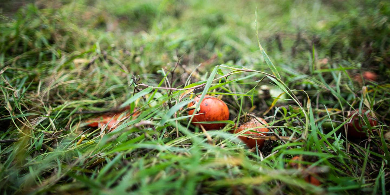 En France, des cultures bio contaminées par un herbicide très utilisé et volatil
