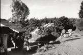 «Le Tilleul» et «Esquisses musicales»: Arpenter la ville de Coronel Pringles dans les pas de Cesar Aira