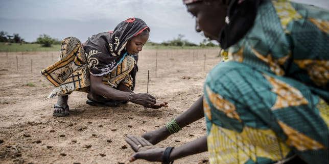 Au Sahel, des solutions numériques pour protéger et valoriser les terres