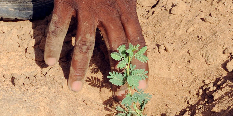 Contre la désertification au Sahel, le CIO veut planter une «forêt olympique» de 355000 arbres