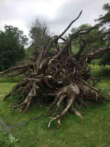Accumulation de souches de pins Douglas abattus par une tempête, cette installation témoigne de la violence des éléments et constitue une trace empreinte des émotions de l'artiste.