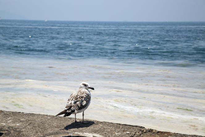 A Istanbul, le réchauffement de la mer provoque des nappes de« morve de mer ». Riveasiatique, sur la plage de Caddebostan, en Turquie, le 13 mars 2021.