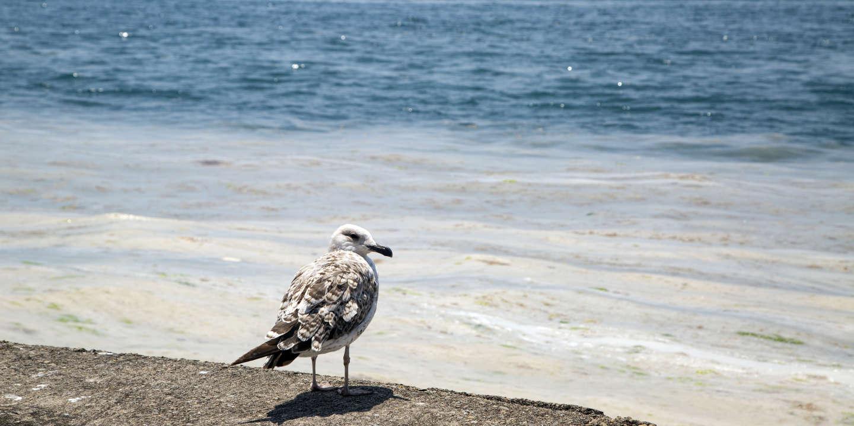 Les eaux de la Méditerranée se réchauffent 20 % plus vite que la moyenne mondiale