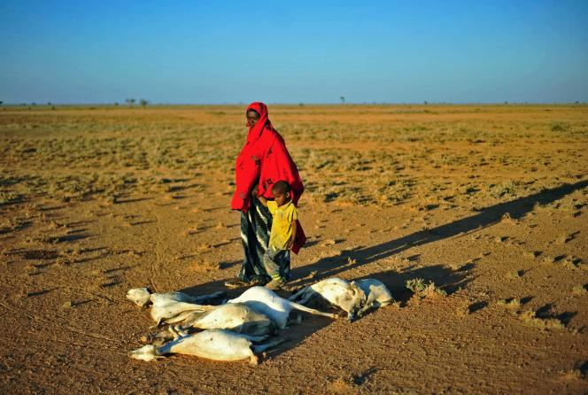 Une femme et un garçon passent devant un troupeau de chèvres mortes sur une terre aride près de Dhahar, en Somalie,le 15décembre2016.