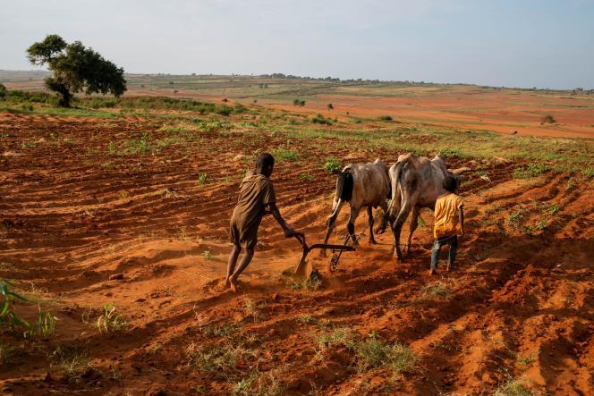 Des enfants labourent un champ près de Maroalomainty, dans le sud de Madagascar, le 2 mai 2021.