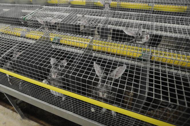 Un élevage de lapins à Vandré (Charente-Maritime), en 2017.