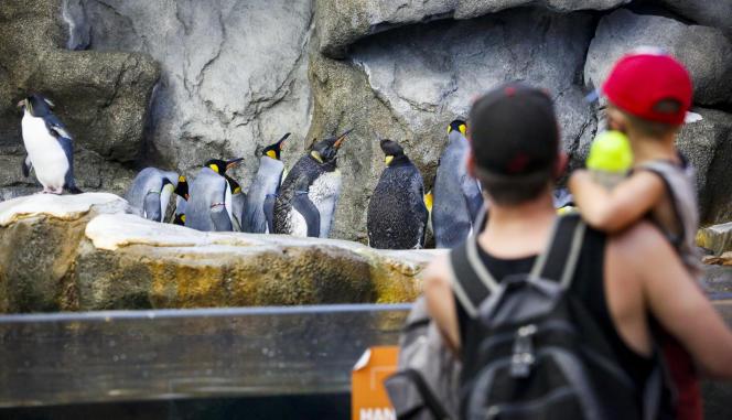Au zoo de Calgary, en Alberta (Canada), le 29 juin.