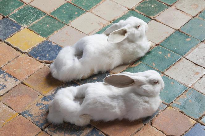 Wim Delvoye : «Sans titre (Rabbit Slippers)», 2005 - Collection Antoine de Galbert, Paris.