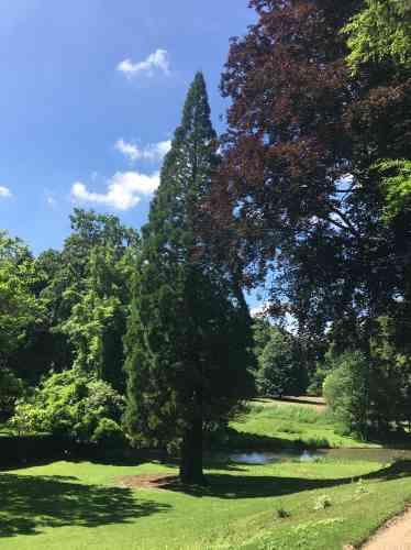 Vue du parc à l'anglaise, avec ses grands sujets végétaux. Le lac et ses bords viennent d'être réhabilités, et le patrimoine arboré élagué et rajeuni.