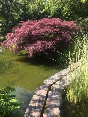 Dans la partie d'inspiration asiatique du jardin deMarylin et Michel Tissait, à Buchy, en Seine-Maritime.