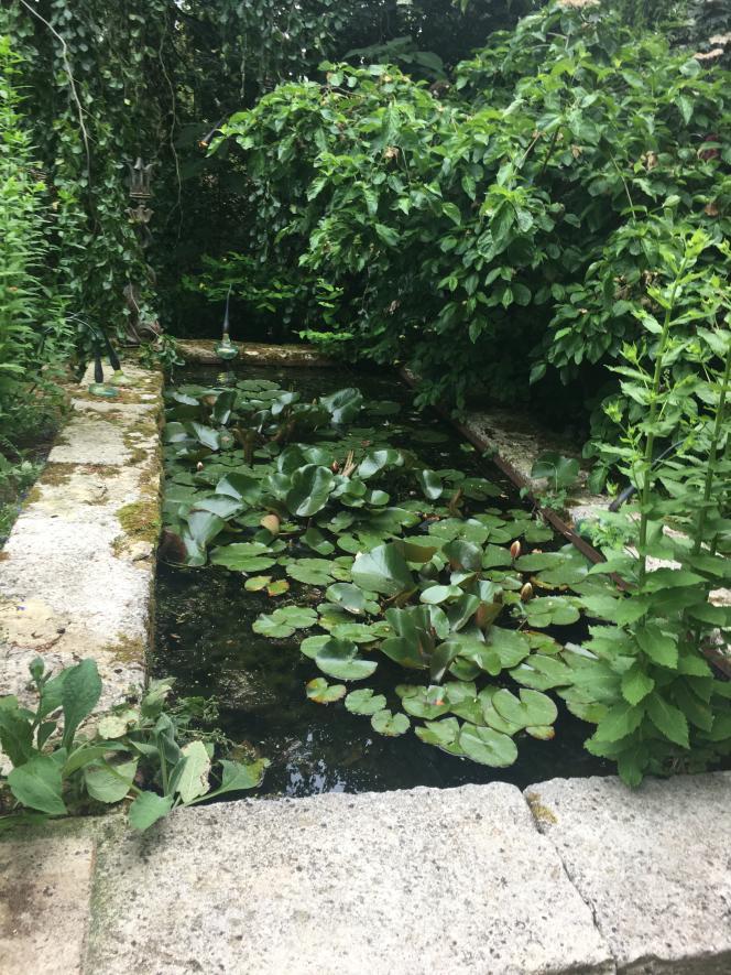 Bassin et plantes aquatiques, dans le jardin Agapanthe.