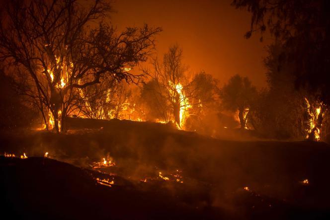 Des arbres brûlent dans une forêt sur les pentes du massif du Troodos, alors qu'un incendie géant fait rage sur l'île méditerranéenne de Chypre, dans la nuit du 3 juillet 2021.