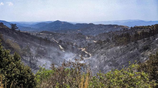 La zone brûlée autour du village d'Ora, dans le district de Larnaca, à Chypre, le 4 juillet 2021.