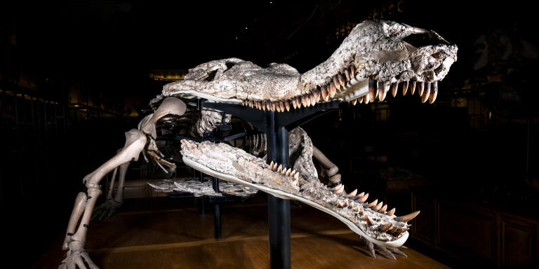 GPAC - Galerie de paléontologie - Sarcosuchus imperator
