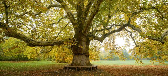 Le code civil« considère [les arbres] comme des «biens immeubles» appartenant à celui qui achète le terrain sur lequel ils sont plantés », déplore Me Benoît Hartenstein, notaire.