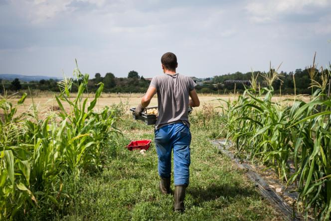 A la Ferme des Millets, dans la Loire, membre du Réseau des espaces-tests agricoles (Reneta), en juillet 2019.