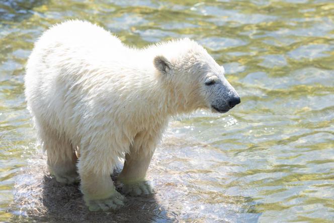 Kara, l'oursonne du Parc zoologique et botanique de Mulhouse, le 4 avril 2021.