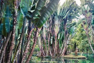 Une vue du lac Frei Leandro, creusé par des esclaves, et la sculpture de la déesse Thetis au fond, entourée par des bosquets d 'arbres du voyageur' et leurs immenses feuillages