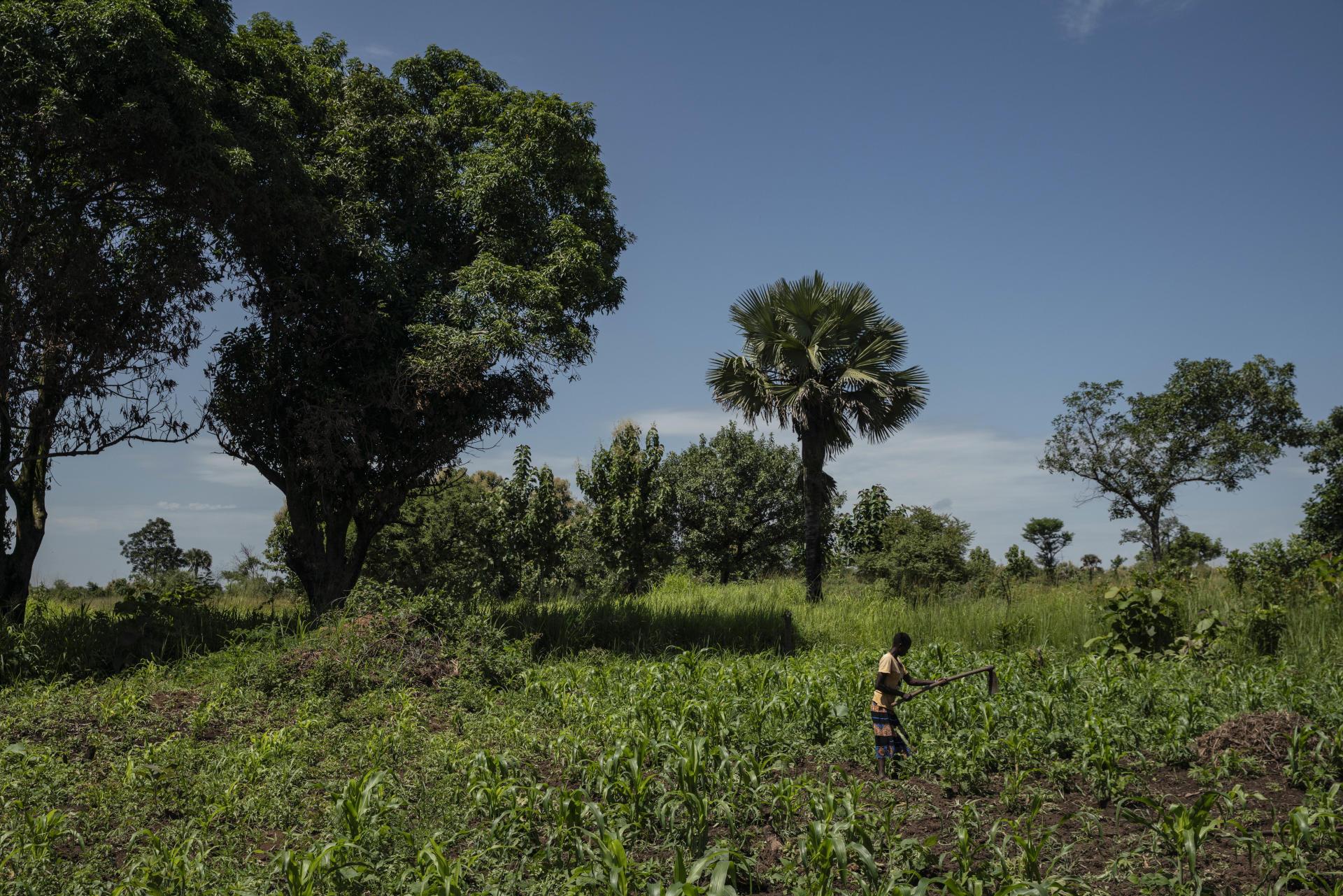 Le 3 juillet 2021, Asunta Oriwa, 30 ans, cultive la terre après son retour récent dans la ville d'Yei, au Soudan du Sud.