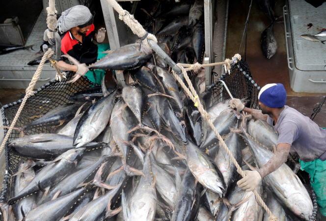 La population de thon rouge, menacée par la surexploitation dans les années 1990 et 2000, se porte mieux en Méditerranée et dans l'Atlantique.