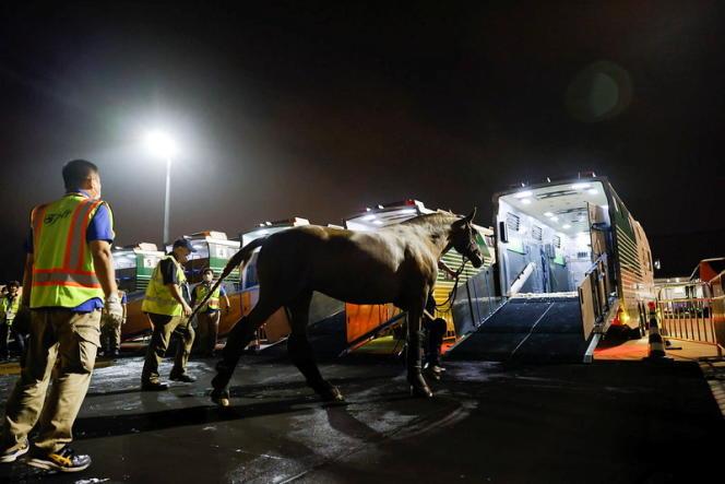 Un cheval de dressage arrive à l'aéroport de Tokyo le 15 juillet, en marge des Jeux olympiques.