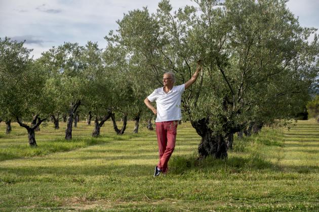 Joël Gayet, gérant du Domaine Leos, dans l'oliveraie.
