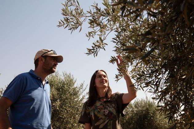José Antonio Peche, directeur général de Casas de Hualdo, et Cristina Aizpun, directrice commerciale, dans l'une des oliveraies de Casas de Hualdo.