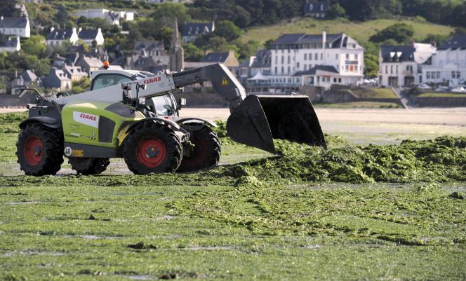 Un tracteur enlève les algues vertes sur la plage de Saint-Michel-en-Grève (Côtes-d'Armor), le 22 mai 2017.