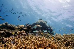 Le long de la Grande Barrière de corail, en Australie, le 25 octobre 2019.