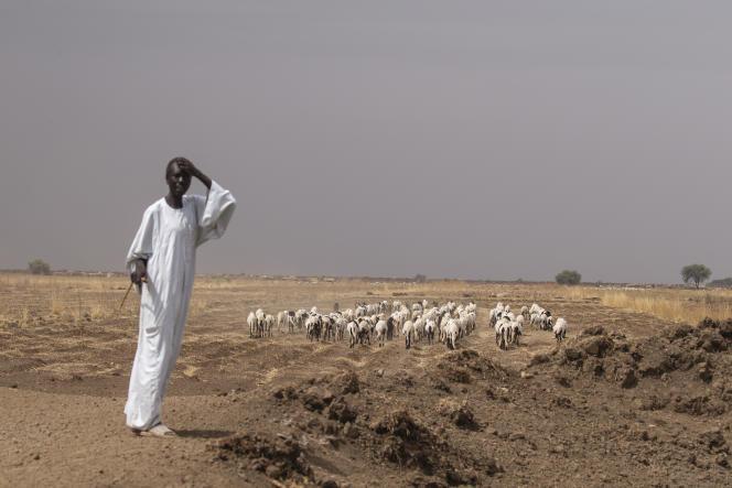 Muhammad Abdullah sur la route avec un troupeau de moutons, près d'Al-Kamilin, dans l'Etat de Gezira, au Soudan, le 17 juin 2021.