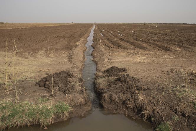 Des agriculteurs commencent à irriguer leurs cultures en utilisant des canaux d'eau répartis sur des milliers d'hectares, près d'El Kamilin, dans l'Etat de Gezira (Soudan), le 17 juin 2021.