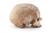 Cro-Magnon 1, homme des «âges farouches»