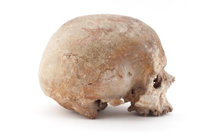 Crâne de l'homme de Cro-Magnon, Les Eyzies-de-Tayac, Dordogne, France, fouilles Louis Lartet, 1868.