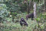 Dans le sud du Cameroun, la difficile cohabitation entre les hommes et les animaux sauvages