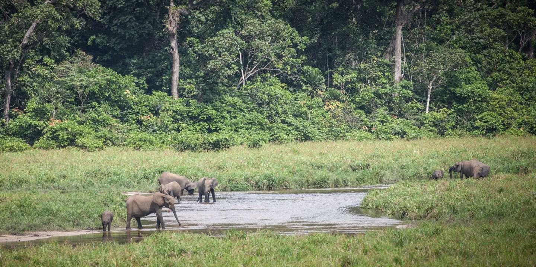 Au Gabon, le parc national d'Ivindo classé au Patrimoine mondial de l'Unesco