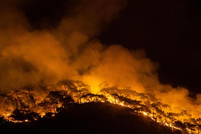 Un incendie ravage les forêts dans la province de Mugla, le 1er août.