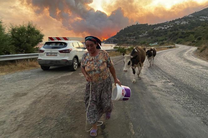 Une Turque part avec ses vaches pour s'éloigner des flammes qui envahissent le village de Cokertme, à côté de Bodrum, le 2 août 2021.