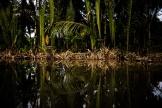 Dans le delta du Mékong, au Vietnam.