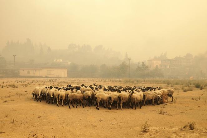 Près du village de Limni sur l'île d'Eubée en proie aux incendies, en Grèce, le 4 août 2021.