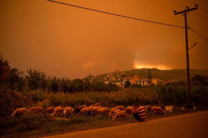 Η Εύβοια, το δεύτερο μεγαλύτερο νησί της Ελλάδας, έχει πάρει φωτιά εδώ και μια εβδομάδα.